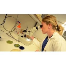 Bakteriologisk vannprøve
